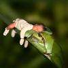 Frosch mit Baby