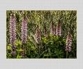 Gartenblumen Kopie