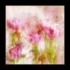 Tulpen rosa 2 Kopie