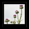 Wiesenblumen Kopie