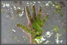 2012 09 22_Lainzer Tiergarten_0263