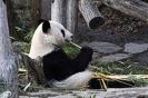 Sonja Stipek Panda k