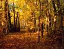 WK_Herbst_CIMG9628